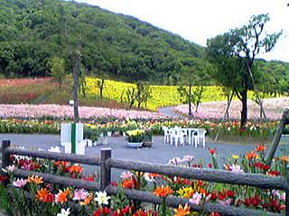 20070613_yuri_park.jpg